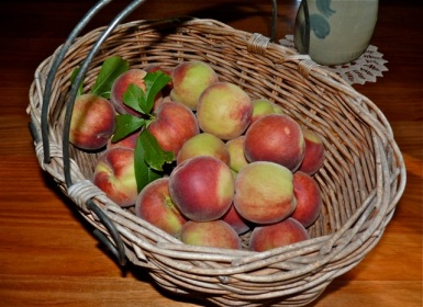 We had a fantastic year of peaches- so juicy and tasty.