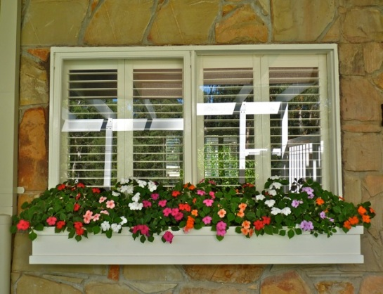 Our new window box that Graham made - the impatience are bright and happy there