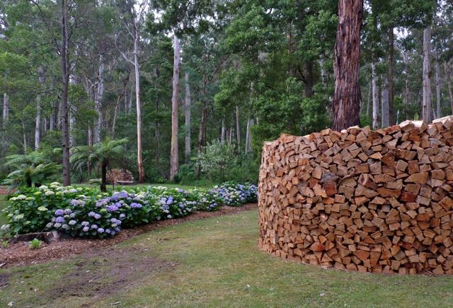 Graham had time to enjoy building a wood stack near our beautiful hydrangeas. It is already 2 meters high and about 4 meters round (I think).