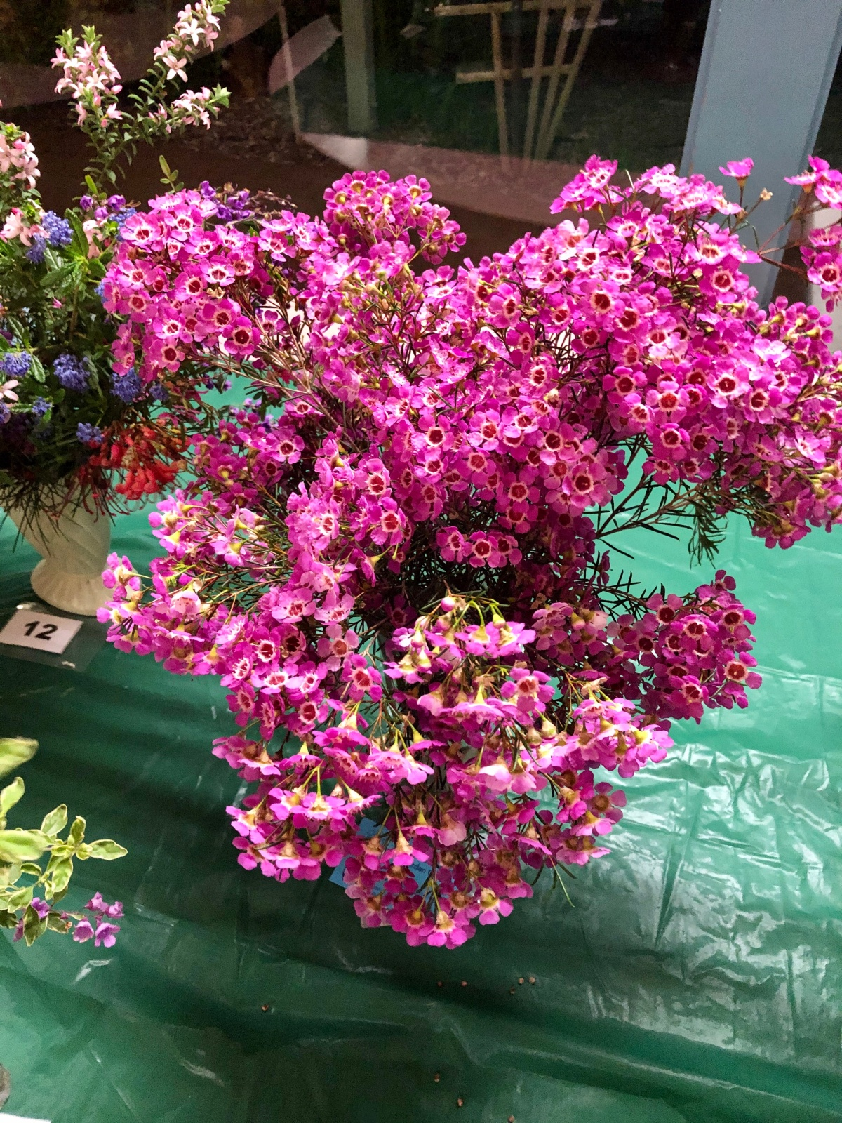 Spring Flower Show – October Meeting